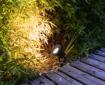 Picture of 4 Pack Outdoor Garden Spike Lights Ground Mount or Watt IP65 Matt Black